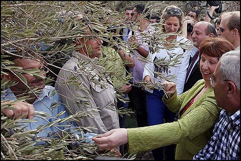 Palestinian Prime Minister Salam Fayyad and EU foreign policy chief Catherine Ashton help farmers in harvesting olives in the village of Ras Karkar near Ramallah.