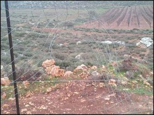 The Esh Kodesh fence and fields.. Photo: Tazpit.