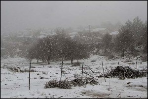 Tzfat, up north, under snow cover. FLASH90