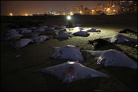 Gaza Batfish Massacre