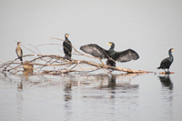Littman-022213-Birds