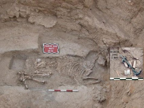 The donkey burial found at Tel Haror. Note the 1992 find of the donkey's skull with the bridle bit in the box at right.
