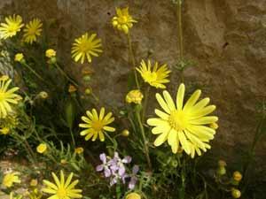Littman-061413-Flowers