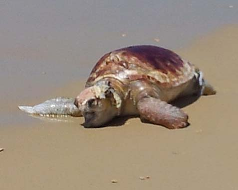 Turtle Washed Ashore