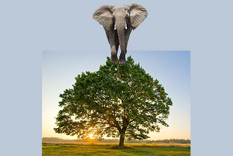elephant in tree