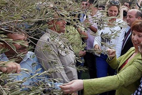 EU foreign policy chief Catherine Ashton helps farmers in harvesting olives in the village of Ras Karkar near Ramallah.