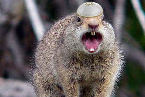 yarmulke_squirrel