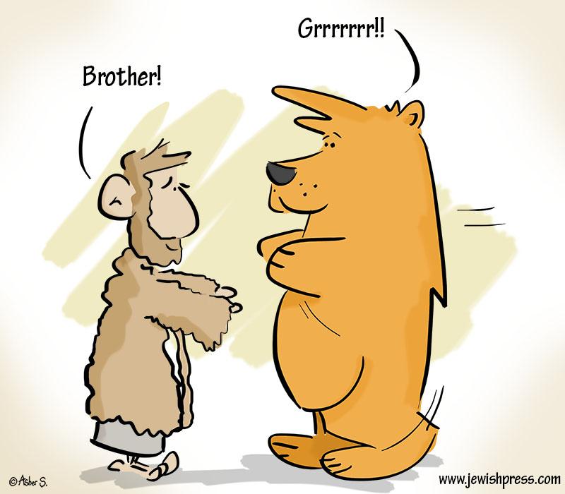 Bear Toldos