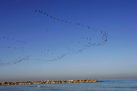 birds on the sea