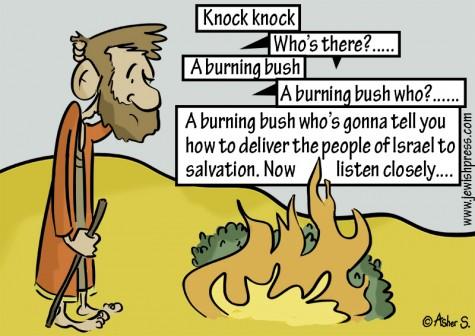 Knock Knock Bush