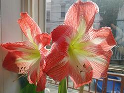 Baim 051917 Flower