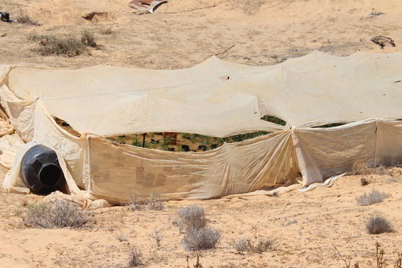 Bedouin weed greenhouse on IDF base / Photo credit: Regavim movement