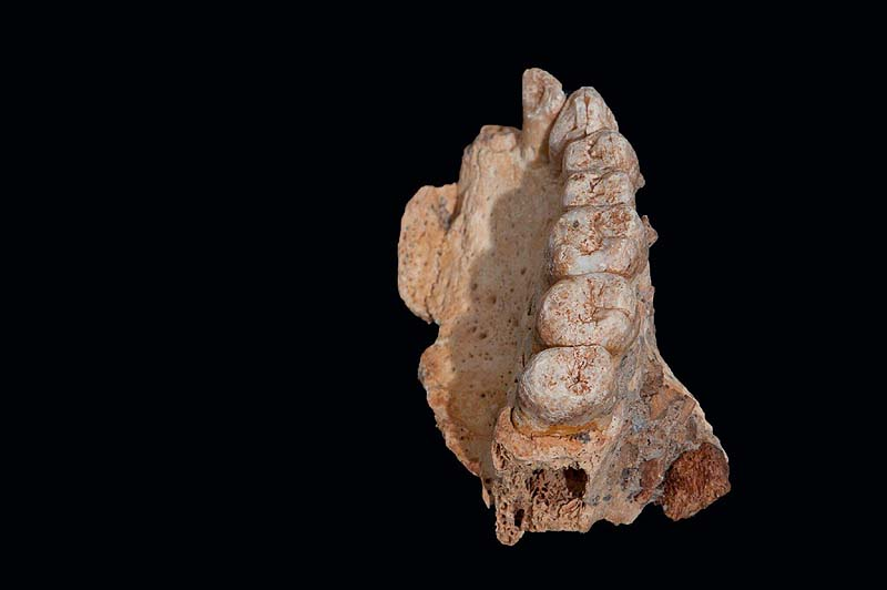 Aviv University spokesperson Jawbone from 177 to 194 thousand years ago discovered in Misliya cave in Israel