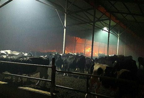 Dairy barn seen with fire in the background at Kibbutz Revadim.