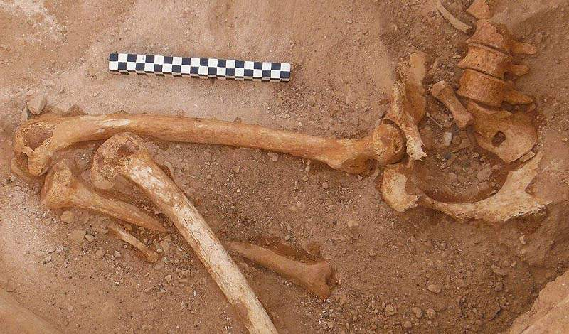 Remains of the lower body of a pregnant woman found in a tomb in Timna / Photo credit: Central Timna Valley Project