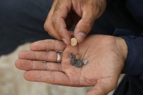 Seals Jerusalem Archaeology