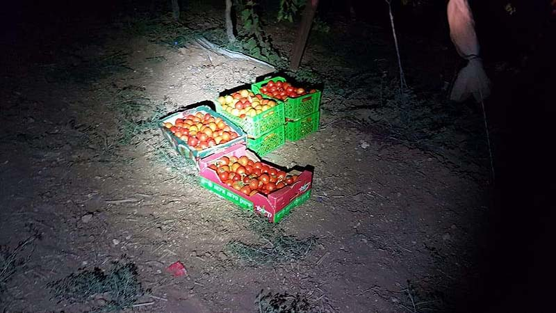 Stolen produce that was seized before Arab thieves managed to haul it off. / Israel Police Spokesperson's office