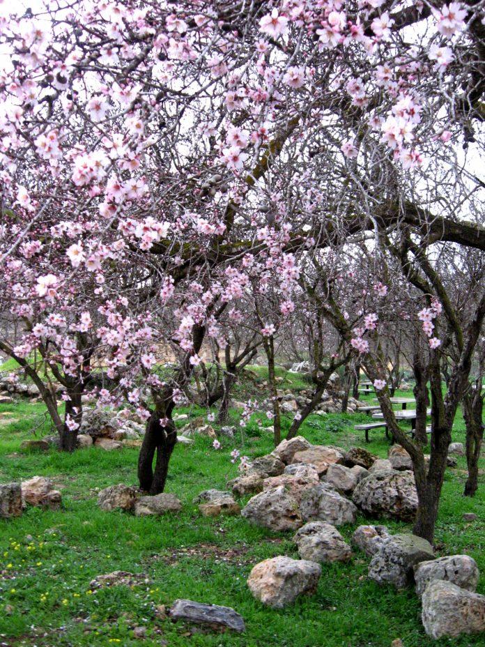 The Land of Israel Rejuvenation: Eve's Personal Month of Sh'vat