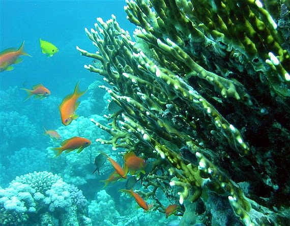 Palau plans sunscreen ban to save coral