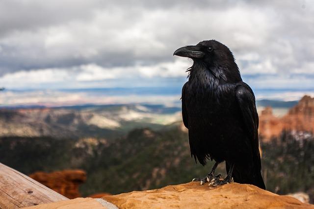 crow 828944 640.
