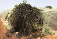 Israel Uncensored: Fighting Agricultural Terrorism in Gush Etzion