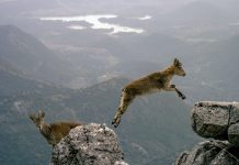 The Soul of Israel: Leap Over Mountains this Passover