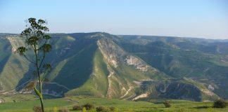 Rejuvenation: The Holy Land for Many